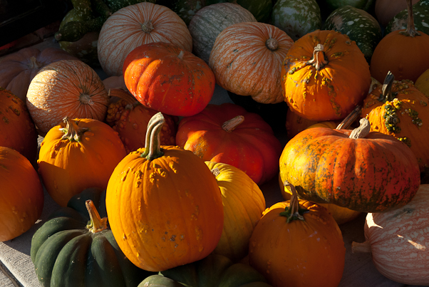 Pumpkins, Amish Market, Hagerstown, Maryland, October 17, 2010
