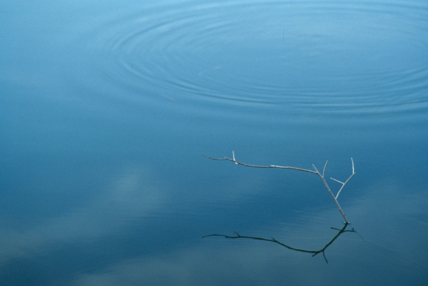 Reflection and ripple at the North Tract, Patuxent Research Center, Maryland.