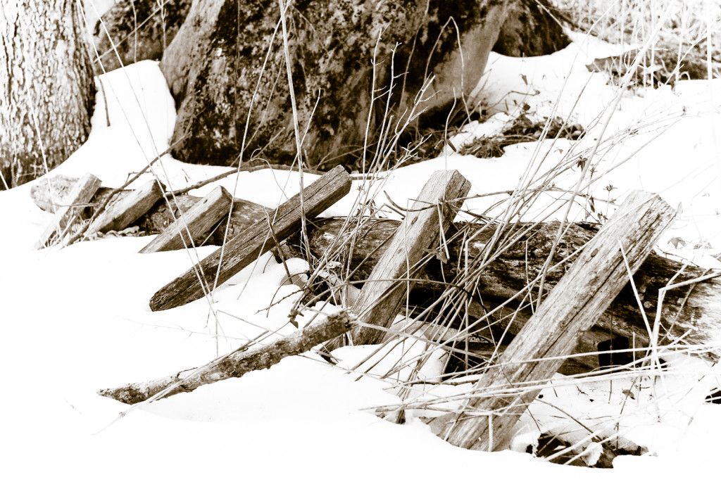 Fence Line Variation, Winter Woods, Hagerstown, Maryland, 2007